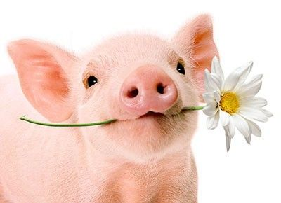 Piggie with a flower. I love pigs - so much I don't eat pork anymore.