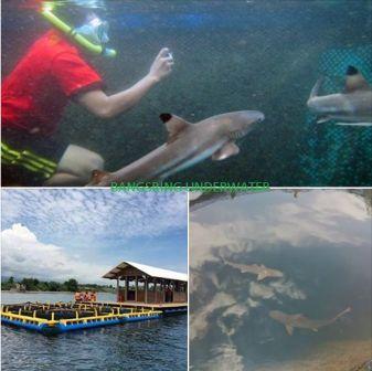 Bangsring Underwater banyuwangi