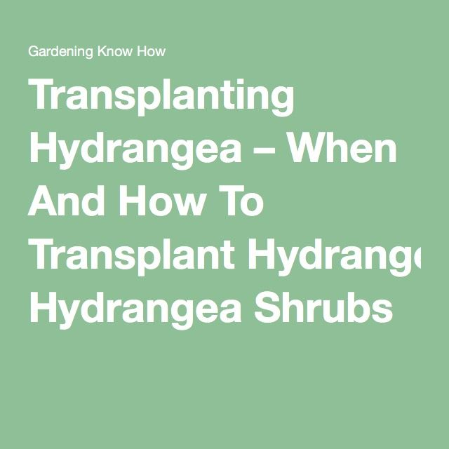Transplanting Hydrangea – When And How To Transplant Hydrangea Shrubs