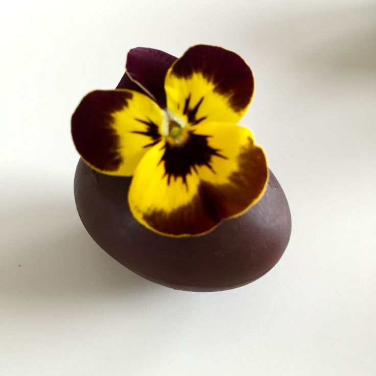 Chokolader med hindbær-lakridsfyld