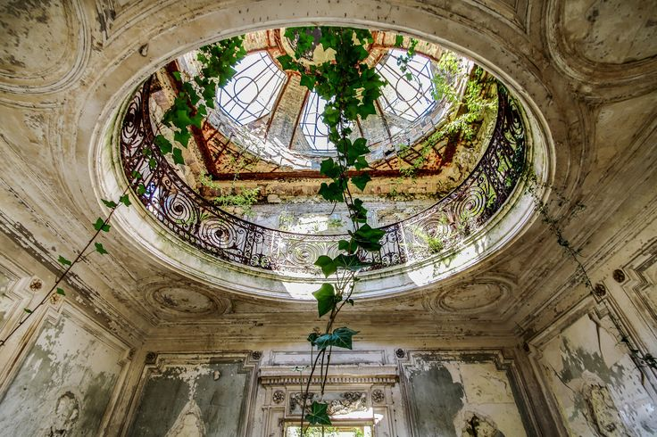 Vines creeping in through an old skylight in the Verrière de chateau. [1600 x 1067] [OS].