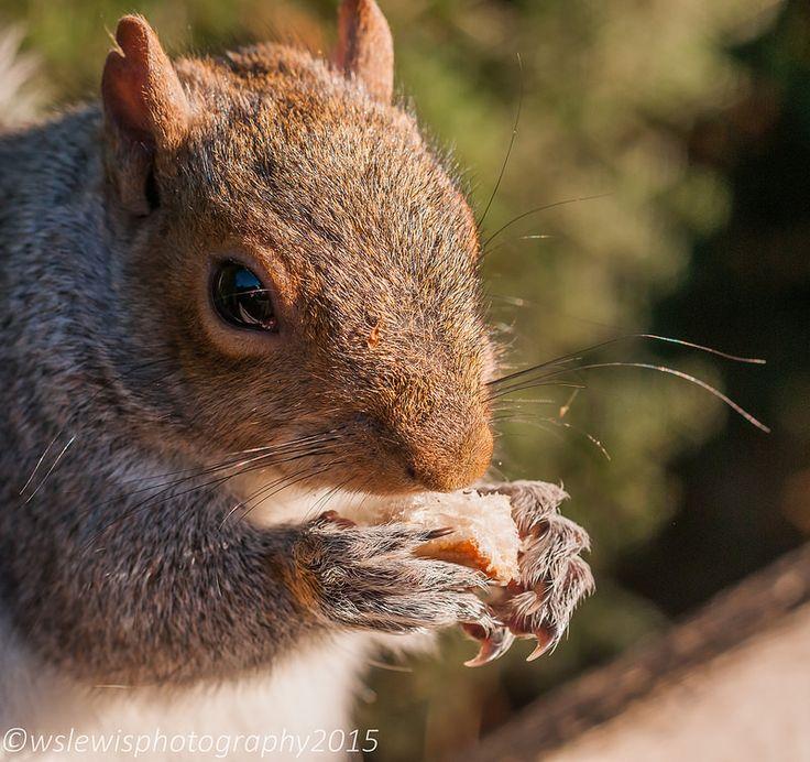 #Squirrel #munching