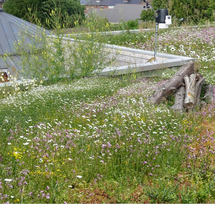 GrufeKit offers 3 stunning living roof options: sedum, wilflowers and wildflowers & sedum. Learn more about these budget friendly, easy to install green roof tiles.