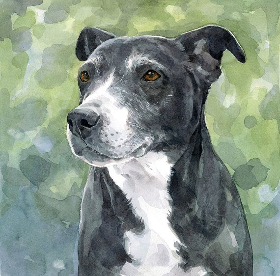 Custom Pitbull Painting Original Dog Portrait by studiotuesday