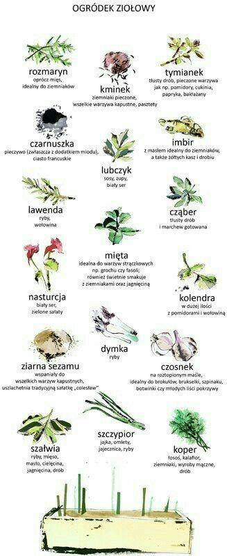 Do czego wykorzystać zioła rosnące w naszym ogrodzie?