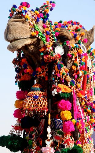 Can this camel SEE?