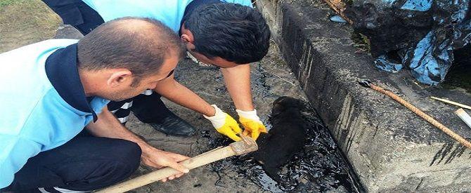 Zifte yapışan köpeği itfaiye kurtardı - TRT Türk Haberler