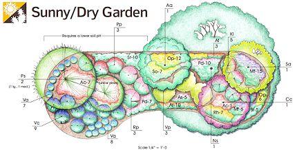 native plants - sunny-dry garden template