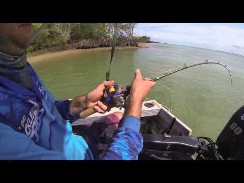 Fishing 2014 barramundi & massive groupers
