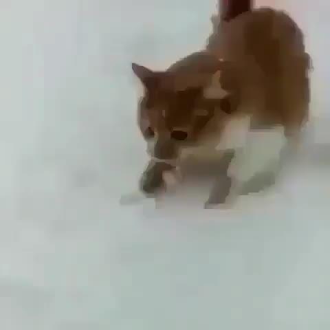Dog being a dog