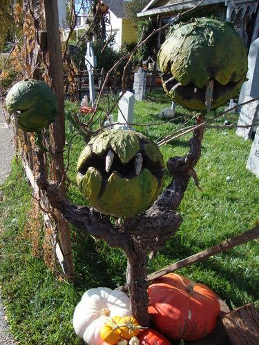 53 Best Halloween Plants Trees Fruit Images On Pinterest