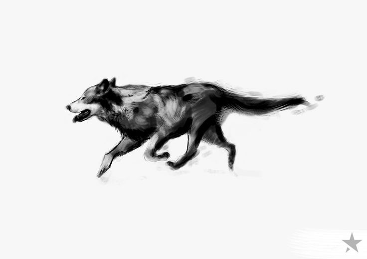 wolf by outstarwalker