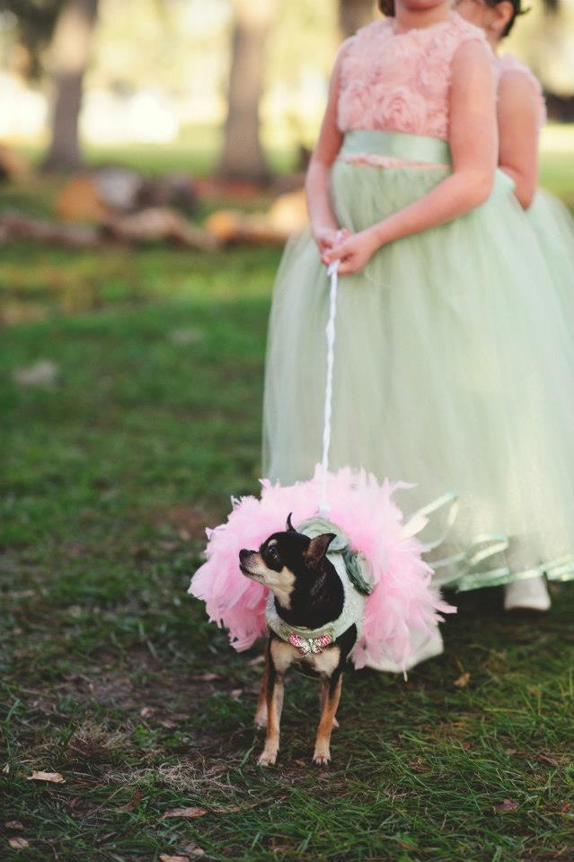 Dog in wedding -   Jason Mize Photography