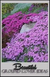 I have always wishes I had at least one spot with enough sun for creeping flox. When it's in bloom...it is just breathtaking. Beautiful ground cover ideas