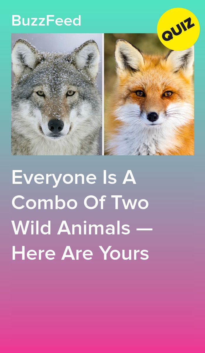 Everyone Is A Combo Of Two Wild Animals Here Are Yours Spirit
