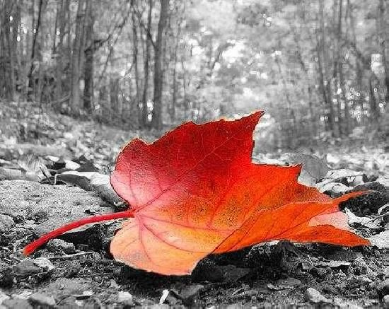 black and white with a splash of color | This is a tutorial on how to make a color splash image with gimp. if ...