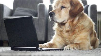 Control Fleas, Ticks in Yard | Control Dog, Cat Fleas | petMD#