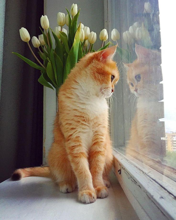Beautiful Ginger!