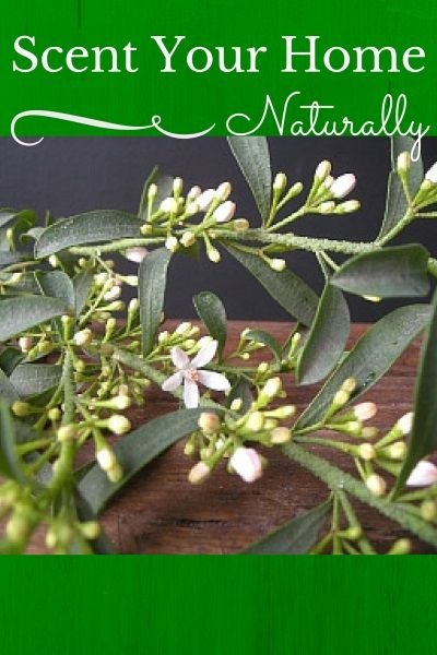 Scent Your Home Naturally By Christie Mcintosh of floriography
