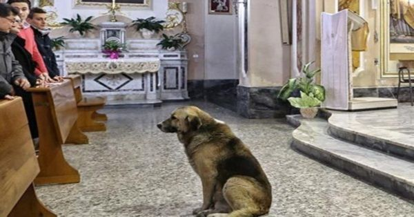 His Owner Died Over a Month Ago; You Won't Believe This Dog's Daily Ritual! So Touching and SO CUTE! | FaithHub