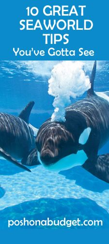 10 GREAT SeaWorld Tips You've Gotta See
