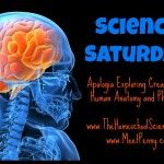 Science Saturday: Apologia's Anatomy & Physiology (Lesson 1)