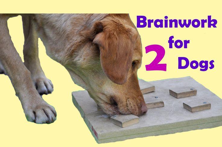 DIY dog brain games; dog enrichment activities ; dog food toys