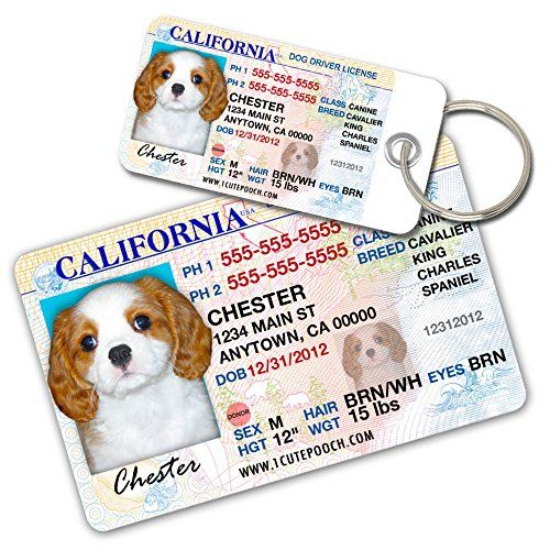 California Driver License Custom Dog Tags for Pets (2) an...