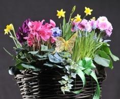 Cos rachita 35cm  Mix flori de sezon la ghiveci (se pot pastra o perioada mai lunga)    120 lei + TVA, CorporateBaskets.ro