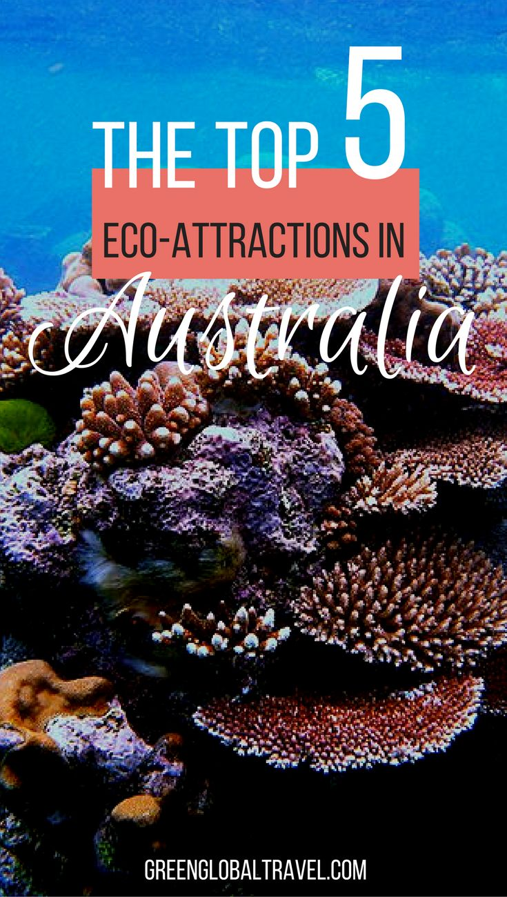 Here's our list of the top 5 eco-attractions in Australia   Great Barrier Reef   Kakadu National Park   Daintree Rainforest   Fraser Island   Uluru   Wildlife   Water   Animals   Nature  
