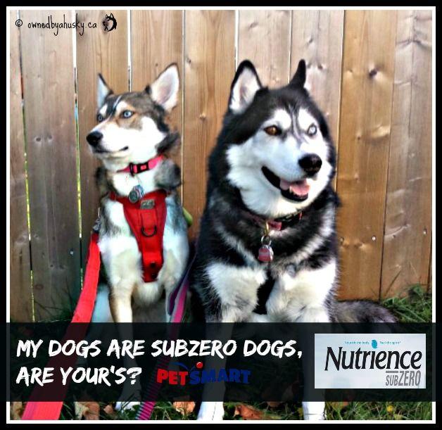 Nutrience Grain Free Dog Food #SubZeroDifference  #spon