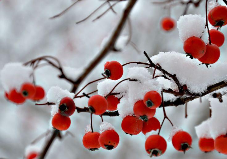 Winter. (Nikon D7000)