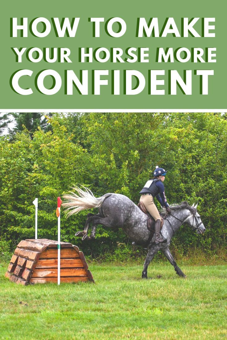 Making Your Horse More Confident Ultimate Guide Horses Horse Life Horse Training