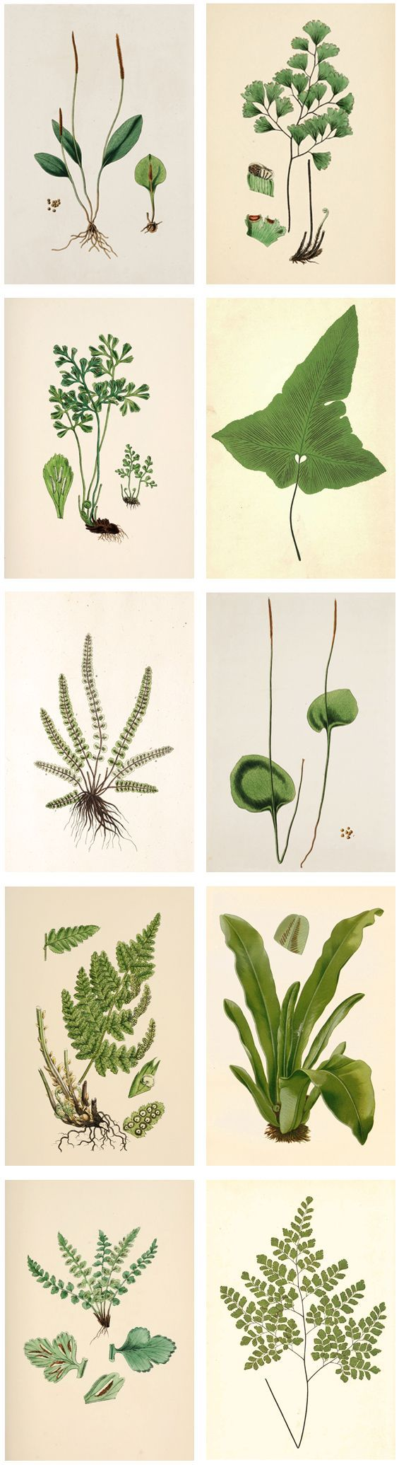 Free Printable Wall Art Plant Illustrations | The Painted Hive