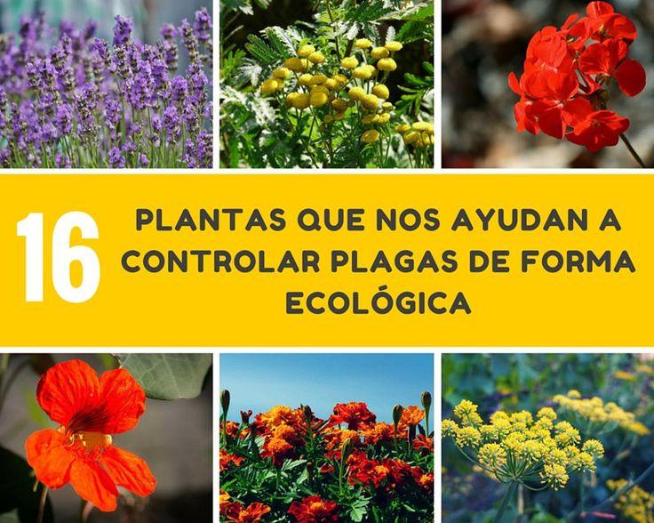Los agricultores siempre han pretendido crear asociaciones de plantas que protejan a los cultivos de plagas de forma natural y ecológica.