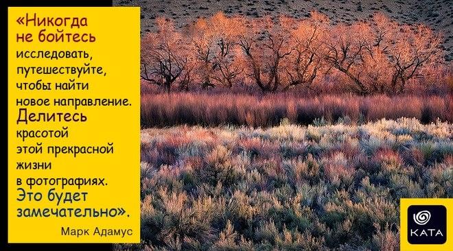 Photo by Mark Adamus   #quote #phrase #landscape #nature #trees