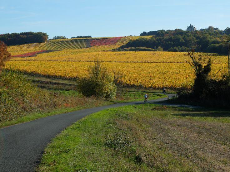 Couleurs d'automne dans les vignes. Photo MNC