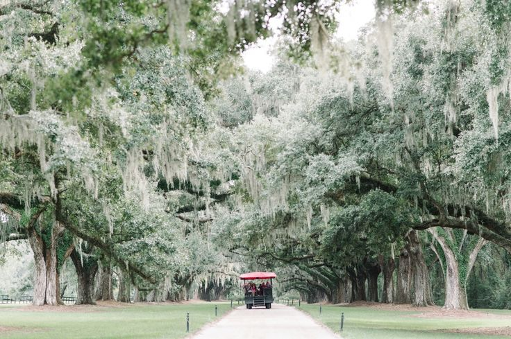 Vintage trolley coming down the tree lined driveway at Boone Hall Plantation