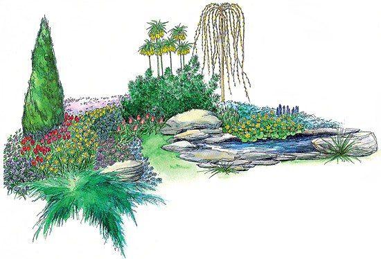 Thuja 'Smaragd,Pinus mugo pumilio,Juniperus 'Blue Carpet',Salix carpea 'Kilmarnock',Arabis caucasica 'Variegata',Aubrieta x cultorum 'Hendersonii',Phlox subulata,Crocus vernus 'Remembrance',Tulipa praestans 'Unicum',Нарцисс 'Rip van Winkle',Крокус 'Yellow Mammouth',Sempervivum tectorum 'Atropurpureum' 13Anemona blanda 'Charmer' 14Scilla sibirica 15Тюльпан 'Pinocchio'16 Sedum spathulifolium 'Cape Blanco'17 Galanthus nivalis18 Fritillaria imperialis 'Lutea' 19Muscari armeniacum20 Caltha…