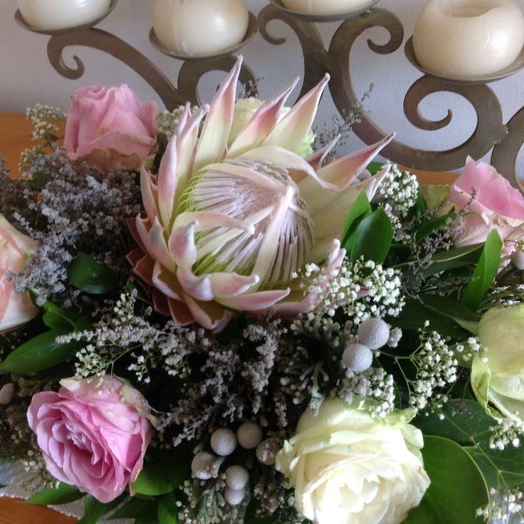 Soft pink protea