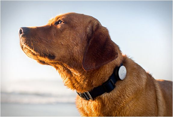 WHISTLE | DOG ACTIVITY MONITOR need to get this for chuck