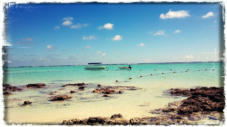 La Palmeraie..... Mauritius. My own photo.