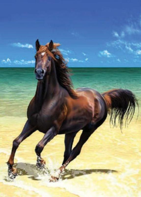 Belo Cavalo... lindo lugar!