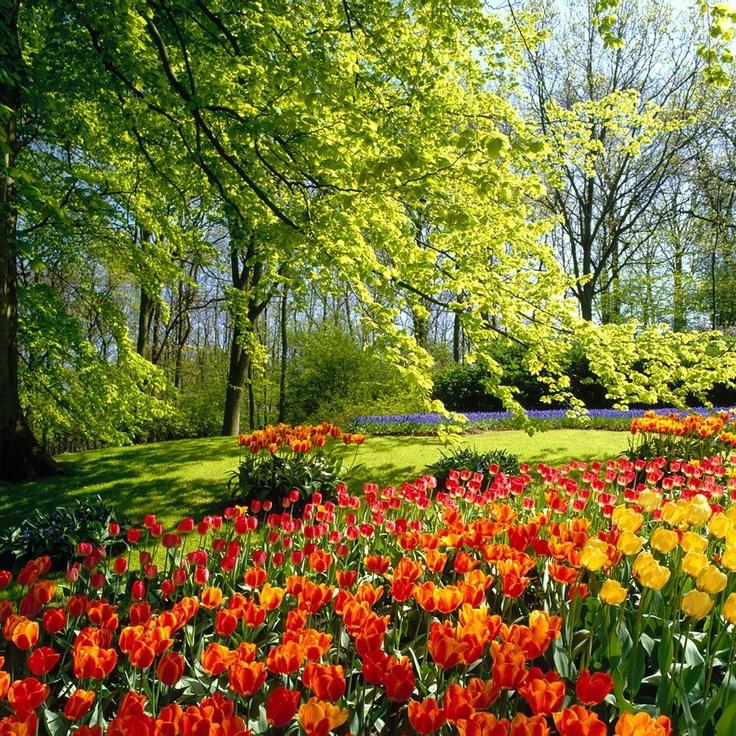 Image detail for -1408-garden-flower-free-ipad-hd-wallpaper_1024x1024.jpg