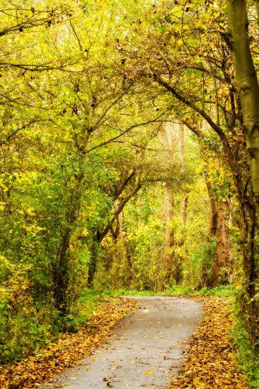 Nieuw in mijn Werk aan de Muur shop: Herfst landschap