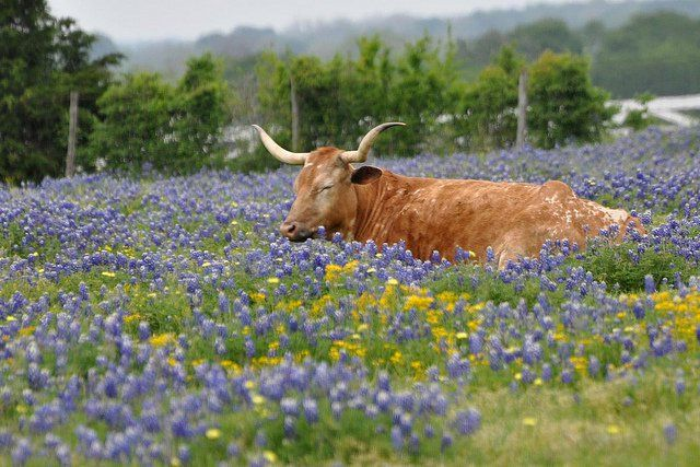 The Best Day Trip Destinations in Texas