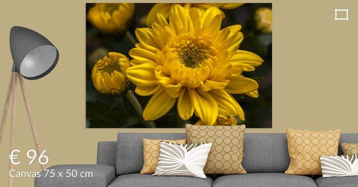 Prachtige foto's voor aan de muur in huis of op kantoor. De naam chrysant is afgeleid van de oude Griekse woorden Chrysos (goud) en Anthemon (bloem).