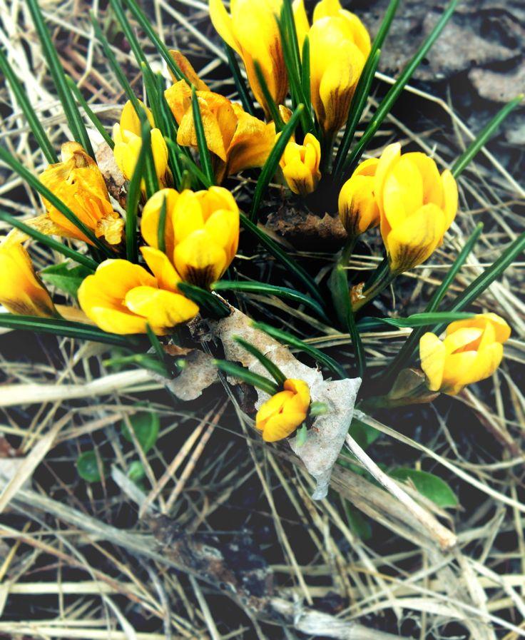 Spring in Sweden.
