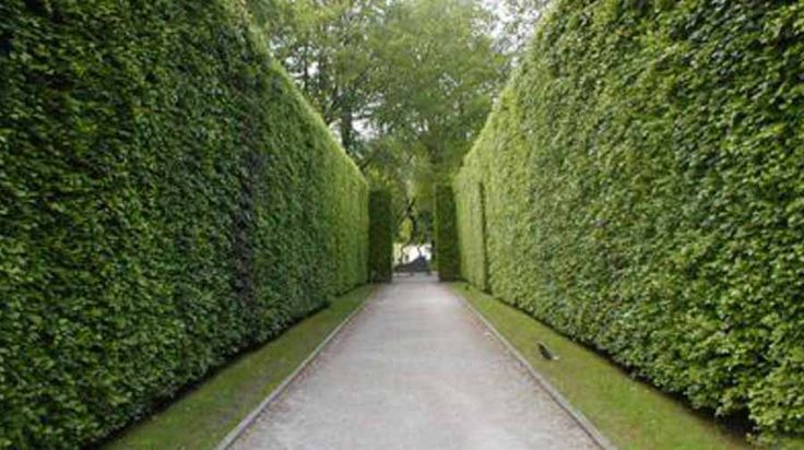 15 Best Green Fences Images On Pinterest Fence Backyard