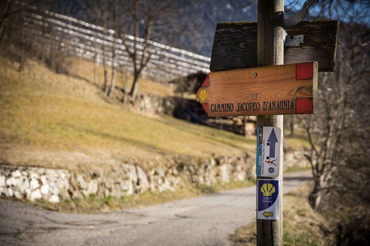 #CamminoJacopeoAnaunia #ValdiNon #Trentino #Dolomiti #CavallinoBiancoRumo #DolomitiWalkingHotel #NordicWalking